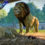 Beta Gameplay trailer voor Planet Zoo