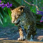 Planet Zoo krijgt een South America Pack